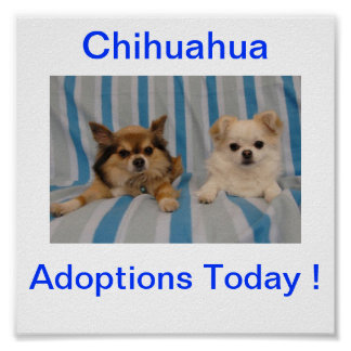 Chihuahua Adoption Today Sign Poster