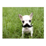 Chihuahua with Funny Mustache in Garden Postcard