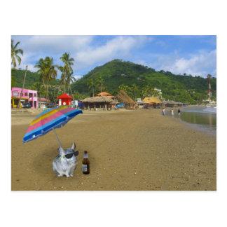 Chinchilla on the beach postcard