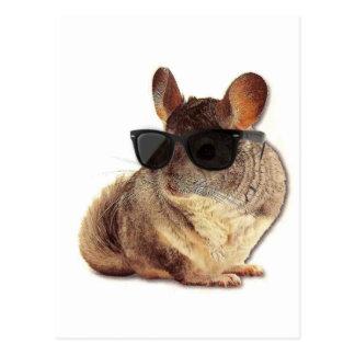 Chinchilla Sunglasses Postcard