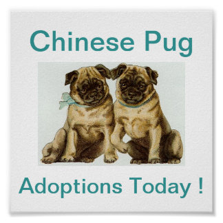 Chinese Pug Dog Adoptions Today Sign Poster