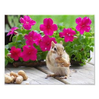 Chipmunk cards photo
