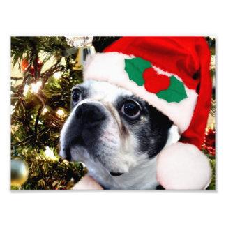 Christmas Boston terrier Photograph