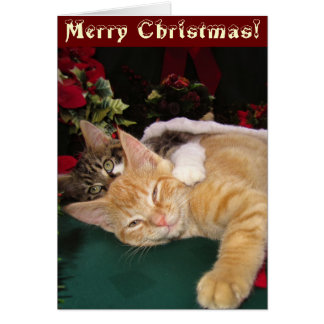 Christmas Cats, Cute Kittens Hugging, Kitty Smile Greeting Card