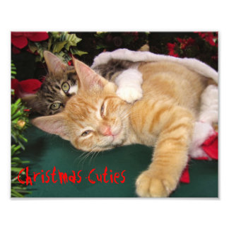 Christmas Cats, Cute Kittens Hugging, Kitty Smile Photographic Print