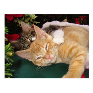 Christmas Cats, Cute Kittens Hugging, Kitty Smile Postcard