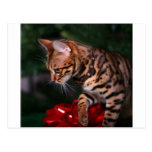 Christmas Kitty Photo (Domestic Bengal Cat) Postcard
