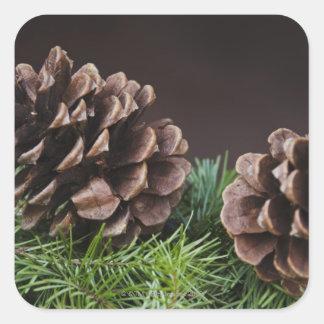 Close-up of pine cone square sticker