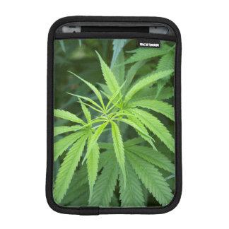 Close-Up View Of Marijuana Plant, Malkerns iPad Mini Sleeves