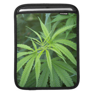 Close-Up View Of Marijuana Plant, Malkerns Sleeve For iPads