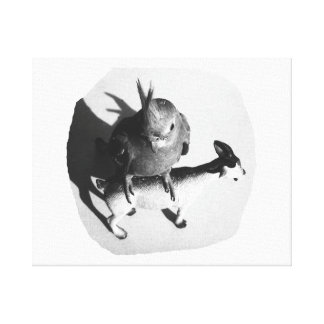 Cockatiel on rubber goat black and white picture canvas prints