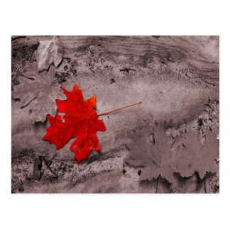 Colored Leaf on Black and White Postcard