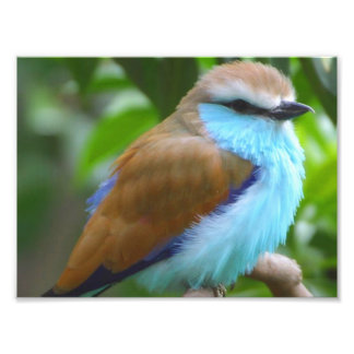 Colorful bird photograph