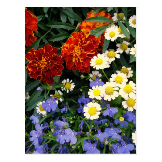 Colorful Flowerbed Postcard