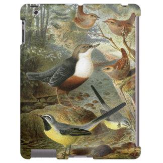 Colorful vintage illustration of birds case