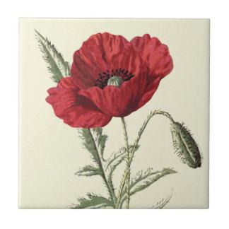 """Common Poppy"" Botanical Illustration Small Square Tile"