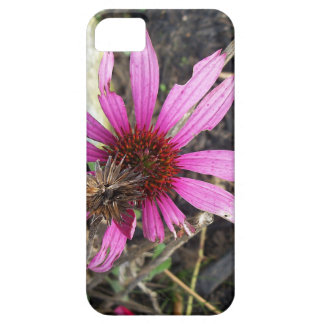 Cone Flower in the Fall iPhone 5 Case