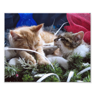 Cool Snow Cats, Two Kittens in Love, Winter Skates Photo Art