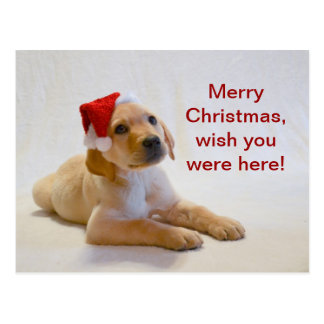 """""""Copper"""" says Merry Christmas! Postcard"""