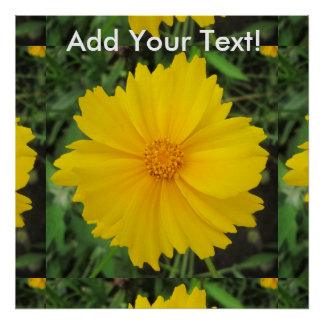 Coreopsis Yellow Flower Bloom Poster