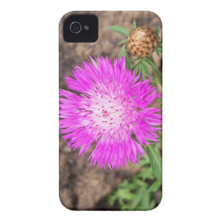 Corn Flower iPhone 4 Covers