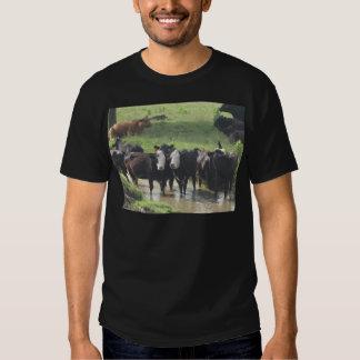 ~ Cows Lookin' Back ~ Tee Shirts