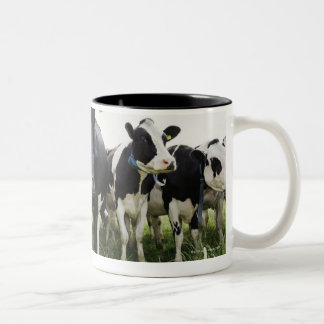 Cows standing in a row looking at camera Two-Tone mug