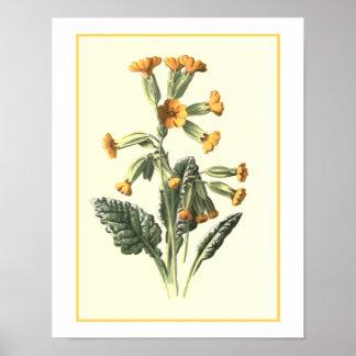 """Cowslip"" Botanical Illustration Poster"