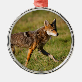 coyote walking Silver-Colored round decoration