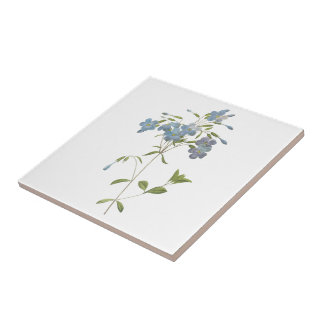 crawling phlox(Phlox reptans) by Redouté Small Square Tile