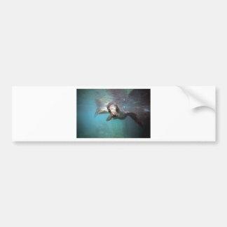 Curious sea lion underwater bumper sticker