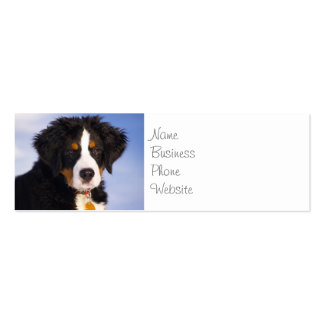 Cute Bernese Mountain Dog Puppy Picture Pack Of Skinny Business Cards
