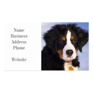 Cute Bernese Mountain Dog Puppy Picture Pack Of Standard Business Cards