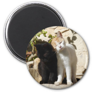 Cute black and white orange kittens 6 cm round magnet