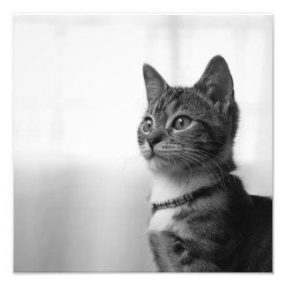 Cute Cat Photo Print