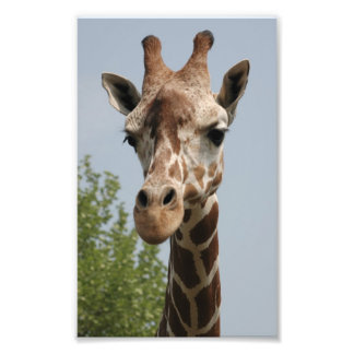 Cute Giraffe Photographic Print