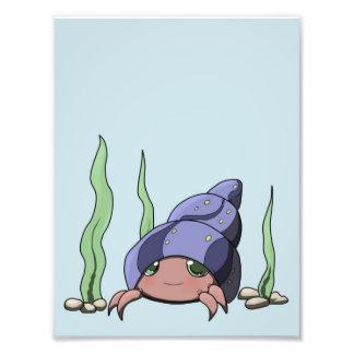 Cute hermit crab photo