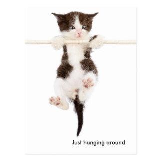 cute kitten hanging around postcard
