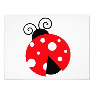 Cute Ladybug Photo