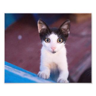 cute little cat photographic print