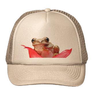 Cute Little Frog Hat Beige
