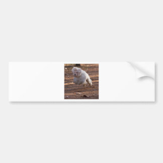 Cute Maltese Dog Bumper Sticker