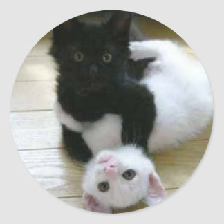 Cute pic of black and white kittens round sticker