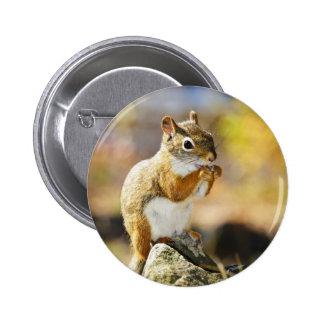 Cute red squirrel eating nut 6 cm round badge