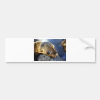 Cute sea lion pup bumper sticker