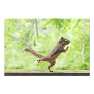 Cute Squirrel Doing Tai Chi Photo