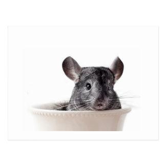 Cute Teacup Chinchilla Grey Postcard