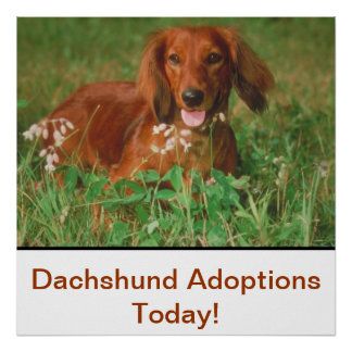 Dachshund Adoptions Today Poster