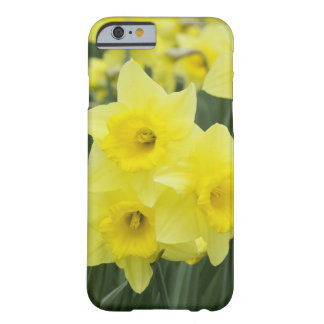Daffodils RF) Barely There iPhone 6 Case