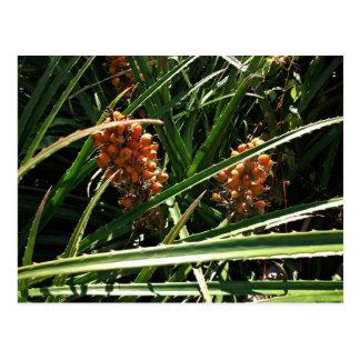 Dates in shrubs postcard